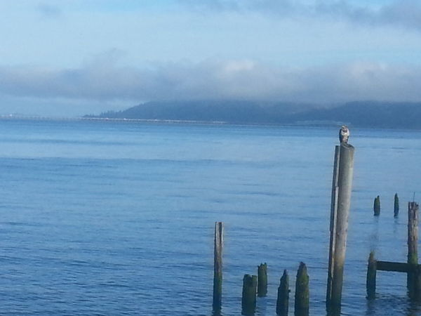 Sea Water Beach Tranquility No People Nature Cloud - Sky Wooden Post Outdoors Sky Scenics Horizon Over Water Beauty In Nature Water's Edge Astoria, Oregon Astoria, OR Northcoastrecovery Reflection Columbia River Beauty In Nature Bird Photography Eagle Eaglet Awe Tide