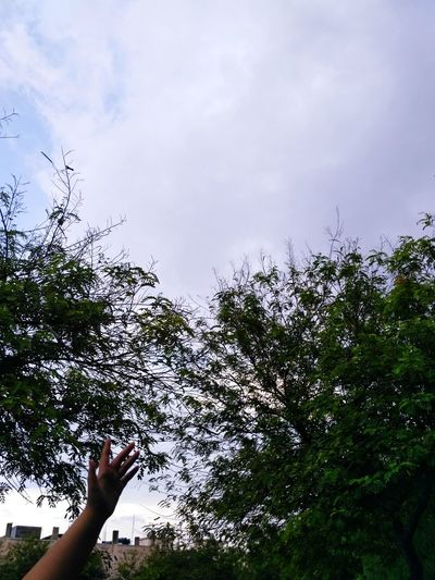 Nature Nature Photography Naturelovers Dawn Pleasant Art Shadow Pattern Hand Patterns In Nature Branches And Sky Branches Leaves Shades Of Green  Monsoon Rain Colourful Mixture  Perseption Connection Love Heart Human Hand Tree Sky Close-up Cloud - Sky Growing Blooming Spread Wings