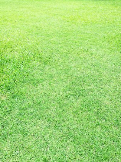 Green grass background. Nature_collection Nature Photography Grass For Ground Grass Background Grass Photography Grass Field Grass Grass Area Grassland Grassfield Background Background Texture Background Designs Background Photography