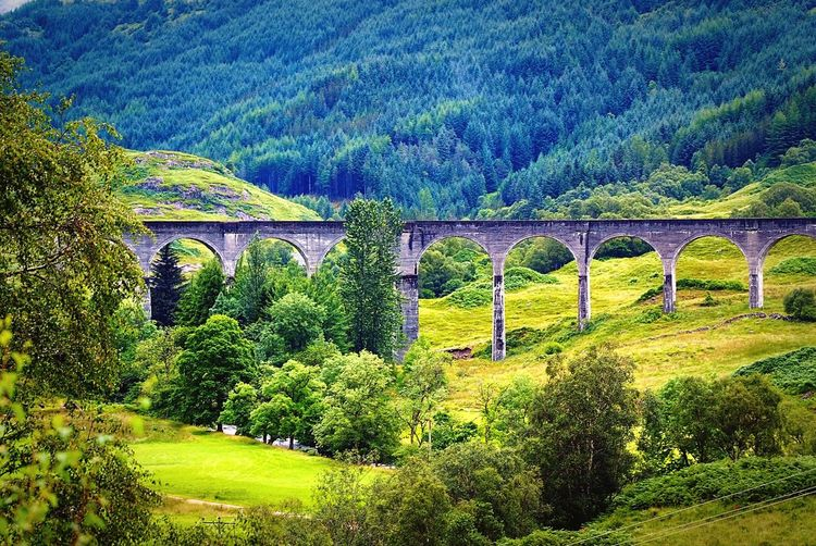Glenfinnan viaduct Bridge - Man Made Structure Connection Arch Viaduct Architecture Tree Built Structure Nature Day No People Outdoors Beauty In Nature Glenfinnan, Scottish Highlands