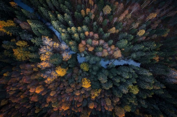 Aerial view of fall foliage in boreal forest with little stream in the middle Aerial Aerial View Aerial Photography Drone Photography Droneshot Dronephotography Boreal Forest Forest Taiga Autumn Colorful Autumn Colors Fall Foliage Above Top View Finland⠀ Finlandfromabove Full Frame Backgrounds Beauty In Nature Nature No People EyeEmNewHere