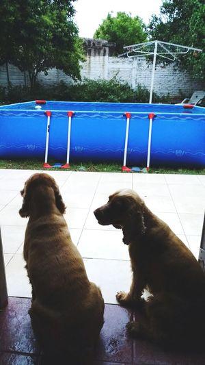 Dog❤ Pets Reflection Outdoors Bonitas♥