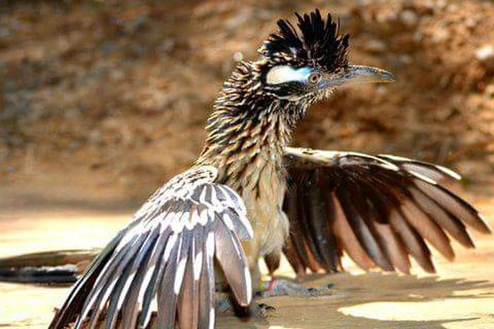 Roadrunner Animal Encounters