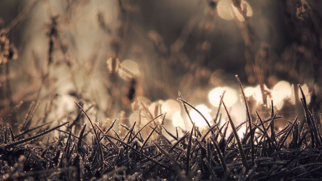 ᶠᴿᴼˢᵀᵞ Crystal Ice Sunlight Sunset Silhouettes Bokeh Nature Photography Nature_collection Nature Frost Close-up Tadaa Community Nature Growth Outdoors Day Focus On Foreground Shades Of Winter Tranquility Beauty In Nature Plant Grass Close-up Freshness Shades Of Winter