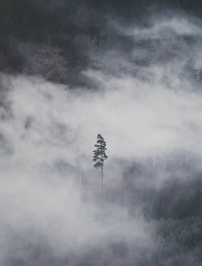 Smoke - Physical Structure Fog Nature Foggy Tree Day Tranquility Landscape Beauty In Nature Outdoors Mist