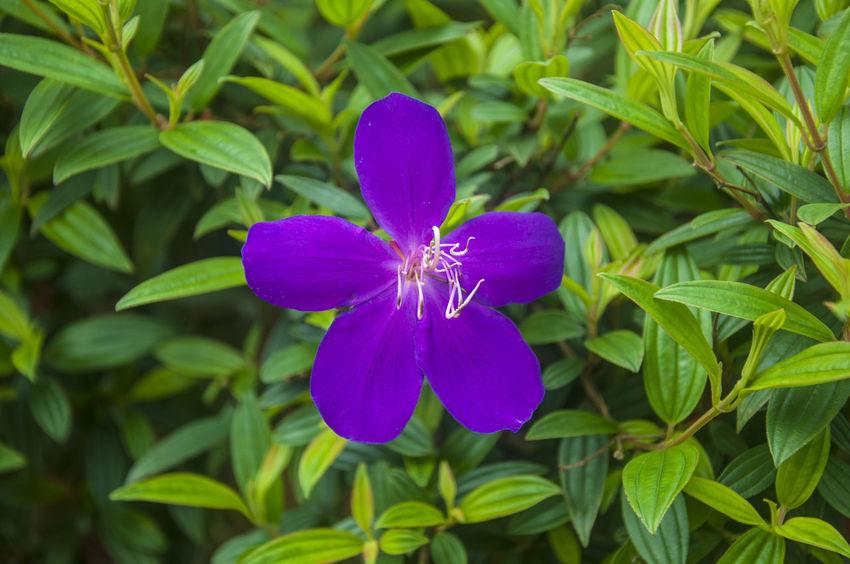 Closeupshot Flora Flower Nature Nature Photography Nature Photography EyeEm Best Shots Purple Purple Flower