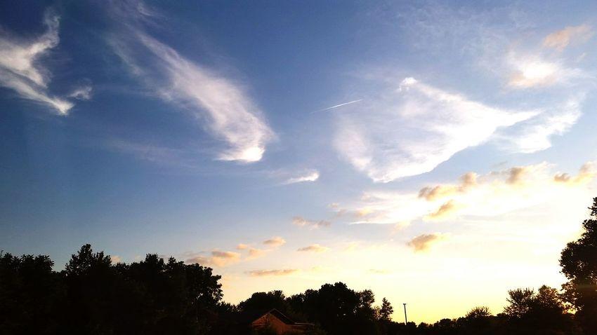 Tree Forest Sunset Blue Sky Cloud - Sky Dramatic Sky
