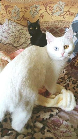 Hi! Cats Lovemycat♥
