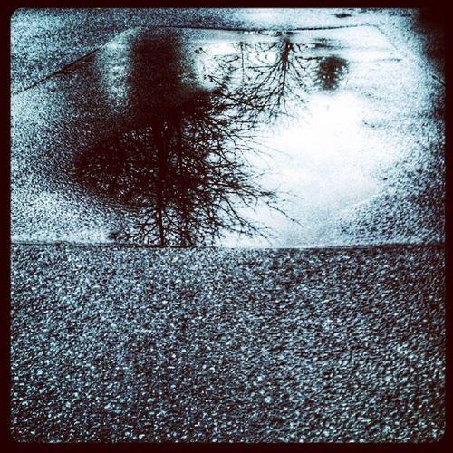 Asphalt Puddle PF ütze Spiegelungen mirroring reflex rain regen water Wasser tree baum street straße dark dunkel picoftheday HDR
