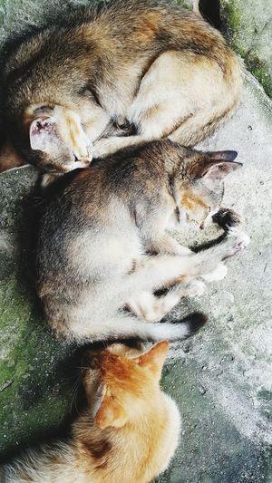 A cat Pets Dog
