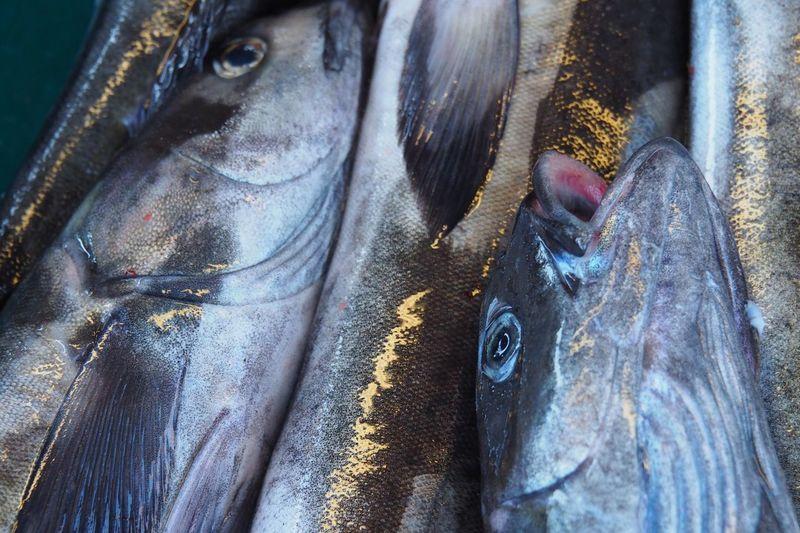 EyeEm Selects Fish No People Day Close-up Outdoors Fisheye Fish Market FishEyeEm Fish Eye Freshness Fresh On Eyeem  Fresh Fishhead Fresh Produce Fresh Food Healthy Eating Healthy Food Healthy Lifestyle Healthyeating Fresh Catch Catch Of The Day