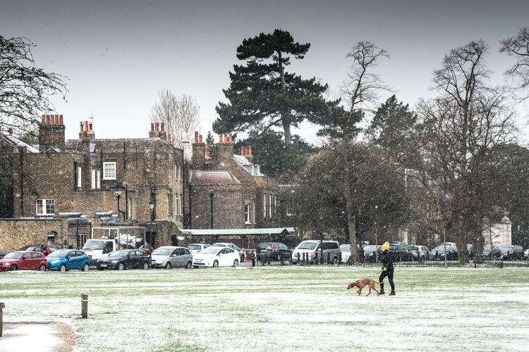 Dog Walking Kew Green Trees Architecture Building Exterior Built Structure Day Dog Grass Large Group Of People Leisure Activity Lifestyles Men Nature Outdoors People Real People Sky Tree Walking The Dog