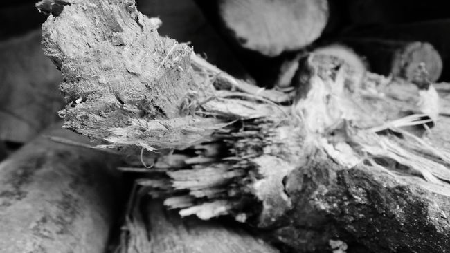 Nature Close-up No People Beauty In Nature Tree Bark Growth Full Frame Log Backgrounds Tree Trunk Timber Wood - Material Deforestation Savetherainforests Savethetrees Savethenature Abstract Photography Abstract Nature Textured  Macro Nature Macro Photography Abstractions In BlackandWhite Black And White Collection  Blackandwhite Macro