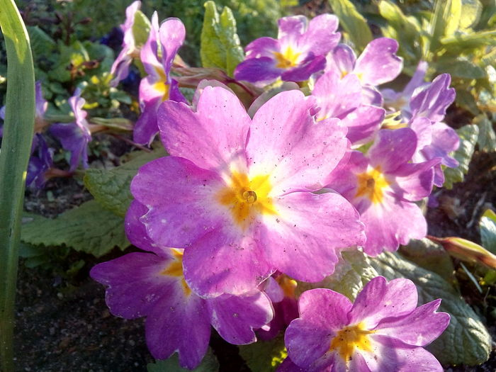 Violet flower Flower Beauty In Nature Flower Head No People Nature Growth Blooming Sunset Transparents Outdoors