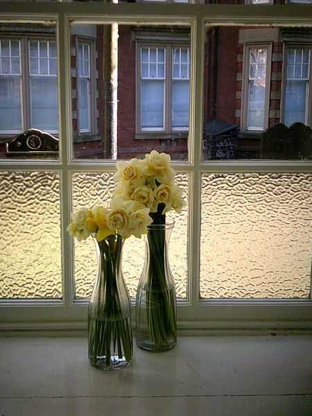 yellow roses Flora Floral, Display, Flowers, Indoors, Frosted Glass, Yellow, Roses, Window, Window Sill, Glass Vase,