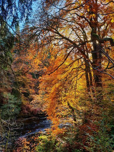 Dunkeld Autumn