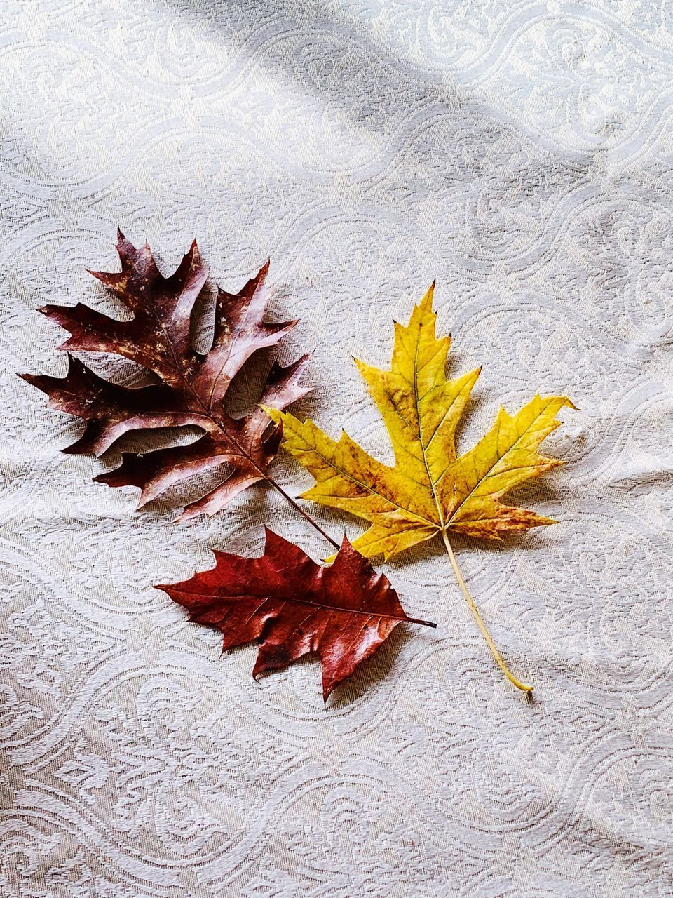 autumn, leaf, plant part, change, dry, nature, maple leaf, no people, close-up, directly above, plant, still life, yellow, vulnerability, outdoors, fragility, high angle view, table, leaves, day, natural condition, fall