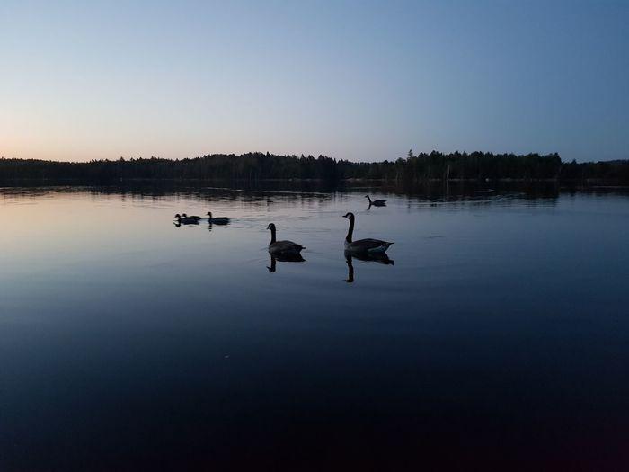 Nihgt View Nightphotography Outdoor Photography Bird Photography Sky Duck Standing Water Water Bird