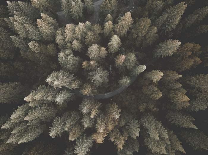 Aerial pine tree photograph. Full Frame Backgrounds No People Nature Day Plant Growth Winter Close-up Pattern Cold Temperature Tranquility Tree Beauty In Nature Textile Wool Green Color Indoors  Creativity Softness Warm Clothing Coniferous Tree Fir Tree Aerial View Drone