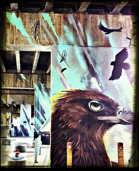 Melbourne Graffiti undertheBridge birds of pray by Bailer