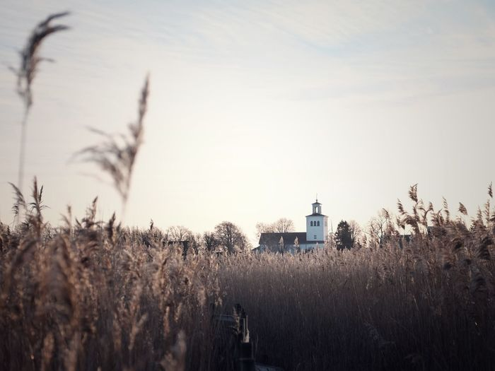 A church amongst the reeds Sky Plant Nature Architecture Tower Built Structure No People Building Growth Building Exterior Tree Field Tranquility Outdoors Cloud - Sky Land Guidance Religion Lighthouse Day