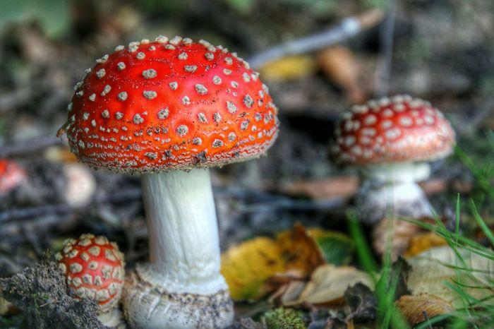 Naturelovers Mushrooms EyeEm Gallery Nature Hdrzone Autumn Colors Autumn HDR Streamzoofamily EyeEm Best Shots