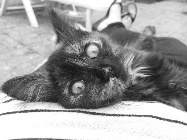 Cat Cute Pets Black And White