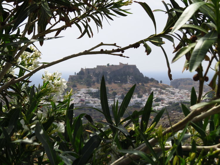 Bush City Cityscapes Foliage Greece Green Hill Idyllic Lindos Looking Through Mediterranean  Mediterranean Landscape Metropolis On A Hill Outdoors Perspective Remote Rhodes Skyline The Great Outdoors - 2016 EyeEm Awards Through My Eyes Through The Trees Travel Destinations Tropical Climate Village