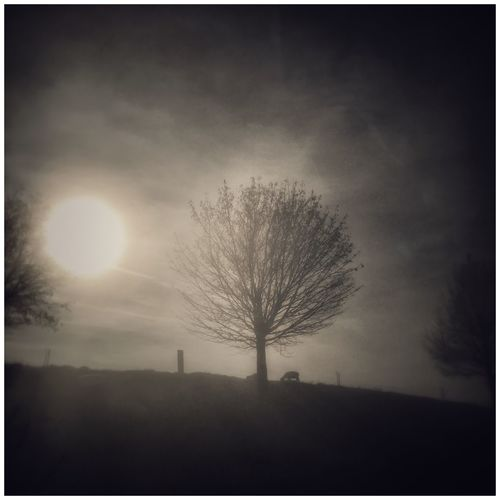 Bare Tree Tree Sky Silhouette No People Nature Outdoors Tranquil Scene Tranquility Beauty In Nature Lone Isolated Day
