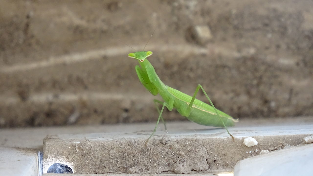 CLOSE-UP OF GRASSHOPPER ON A WALL