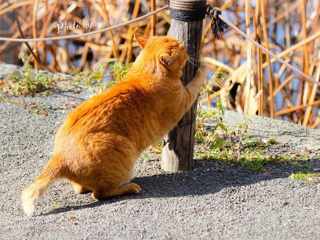 Cat Stray Cat Cat♡ 野良猫 猫 茶猫 Cat Lovers Kitten Animal Playing With The Animals