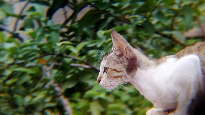 Domestic Animals Mammal Feline Domestic Cat One Animal Animal Themes No People Pets Day Outdoors Close-up Animal Shot With Mobile Clip Lens Young Animal Kitten Cute Cat Whisker Portrait Sitting Pet Portraits