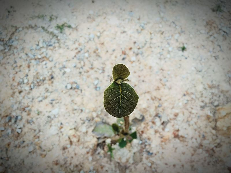 Sapling Sapling Tree Plant Nature Growth No People Day Beauty In Nature Outdoors
