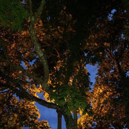 Treesandstreetlamps