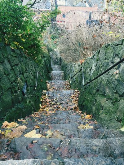The Secret Spaces Stairs Rainy Days Hidden Path