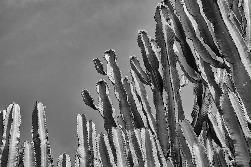 Close-Up Of Cacti Against Sky