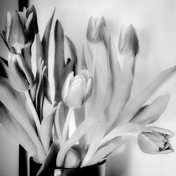 Mapplethorpe Sunday Interior EyeEm Stockholm Sweden Monoart Monochrome Bnw Black And White Eye Em Best Shots -Black +White Art EyeEm Best Shots EyeEm Gallery EyeEmBestPics Flowers,Plants & Garden EyeEm Nature Lover