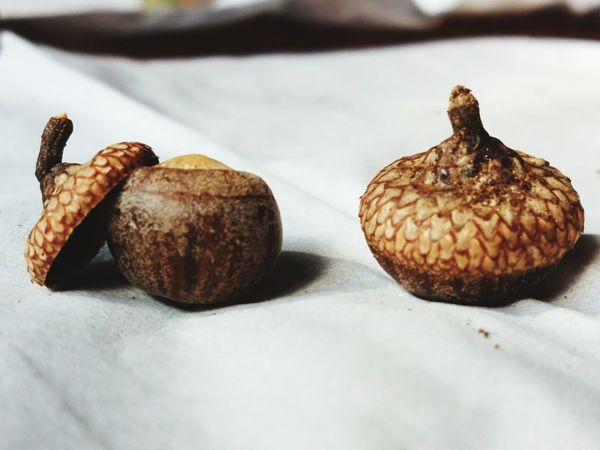 EyeEm Selects Beauty In Nature Nature_collection Acorns Acorn Cap Close-up Another View Another Point Of View Outdoors