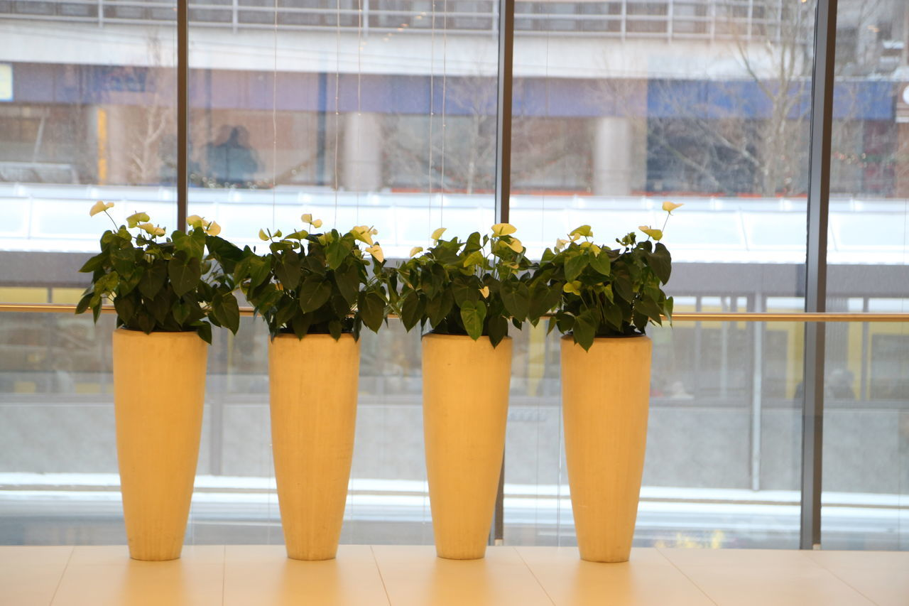 potted plant, plant, growth, indoors, no people, window, day, nature, freshness, close-up, flower, greenhouse