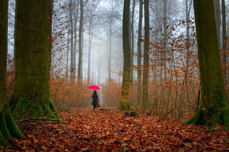 Rear view of person walking on autumn leaves in forest