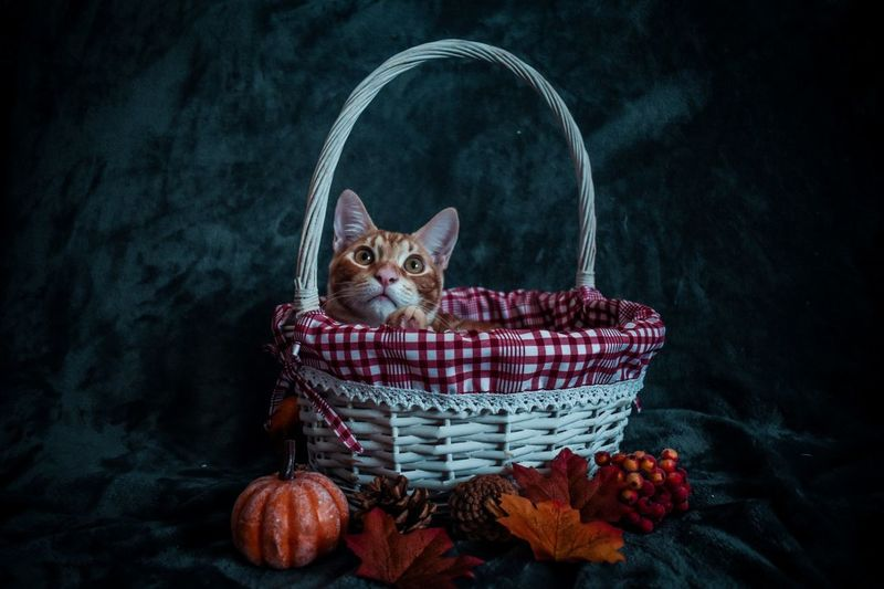 Portrait of cat sitting in basket