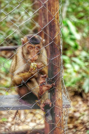 A monkey from Pelawan forest, Bangka Island, Indonesia HDR INDONESIA Forest Nusantara Animal