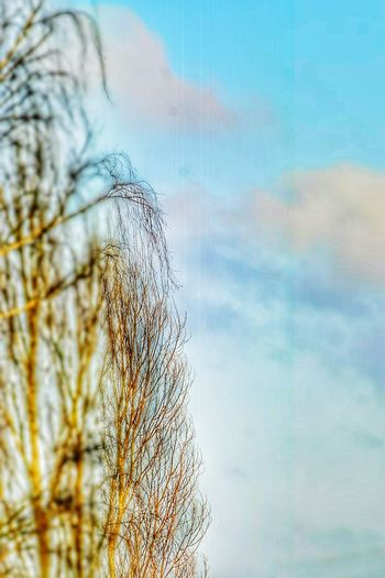 Sky Nature Bare Tree Cloud - Sky Tree Outdoors No People Day Close-up Beauty In Nature Winter Tree EyeEm Nature Collection EyeEm Nature Lover Branch Cold Temperature Sky_collection Cloud_collection  Sky And Clouds Clouds And Sky Cold Weather