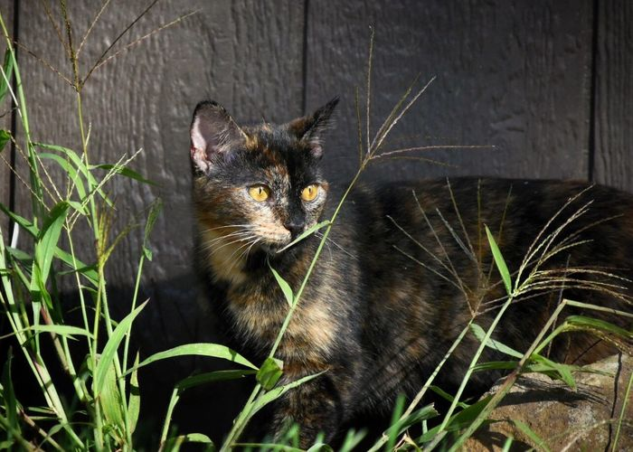 Close-Up Of Cat Against Fence