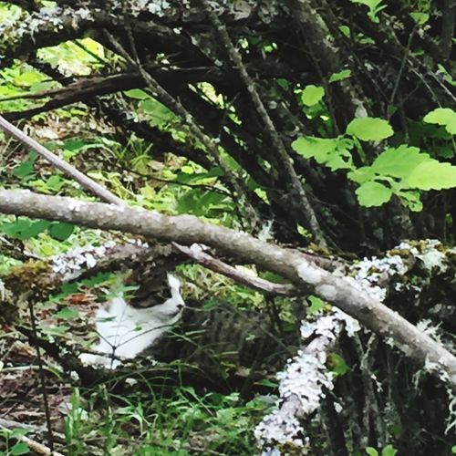 Cat on the prowl Cat In Woods cat hidden in brush Feline Hideout cat waiting for a bird Cat Hunting For A Mouse Hidden Gems