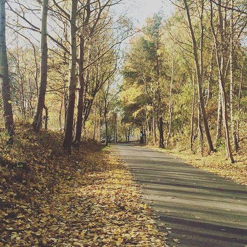 6. Vzcopl Vscocam Vscogood Vzcopolskazlota Instarybnik Autumn