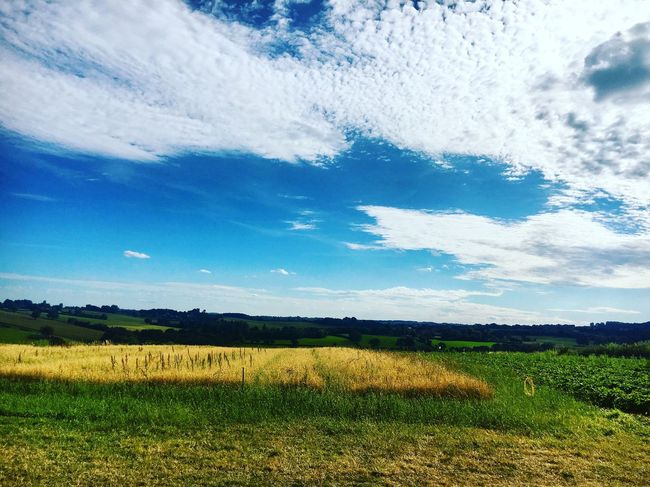 Fields for Miles Landscape Field Tranquil Scene Tranquility Nature Beauty In Nature Agriculture Scenics Farm Rural Scene Sky No People Cloud - Sky Growth Hay Bale Strawberry Picking Bewdley Landscape_Collection Sun Day Farm Life Fieldscape Daytime Peace Grass