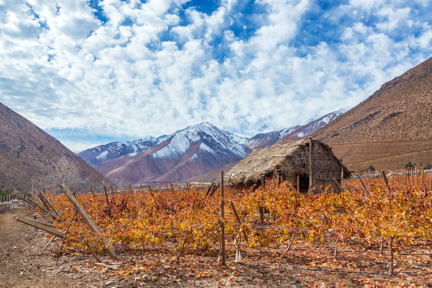 Vineyard in the Elqui Valley for pisco production with Andes mountains in the background in Chile Agriculture Autumn Chile Country Countryside Elqui Farm Grape Grapes Grass Hill Landscape Nature Outdoors Pisco Sky South America Summer Vicuña Vicuña, Chile Vine Vineyard Vineyards  Wine Winery