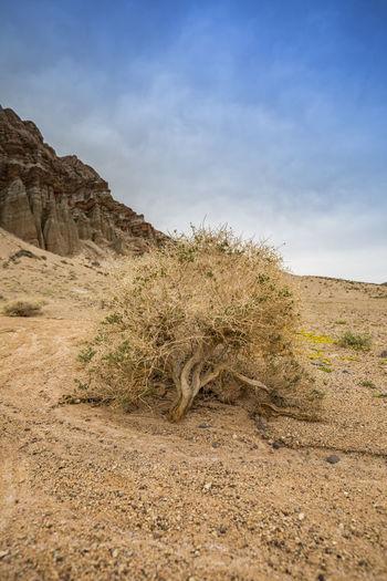 Day Desert
