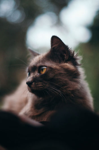 Close-up of brown cat sitting outdoors